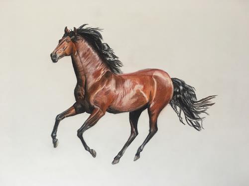 Daniela Böker, Pferd im Galopp, Diverse Tiere, Bewegung, Naturalismus