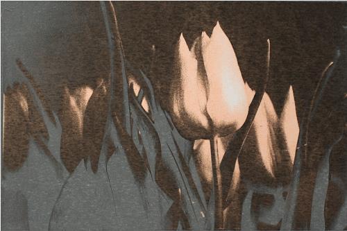 Irene Giesser, Tulpen schwarz silbergrau, Pflanzen: Blumen, Expressionismus