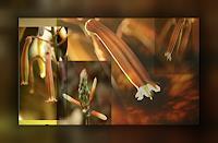 Klaas-Kriegeris-Natur-Diverse-Pflanzen-Blumen-Moderne-Pop-Art