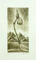 arthoss, Die Buschelspitz