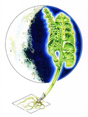 Roland Spohn, Mondraute, Weltraum: Mond, Diverse Pflanzen, Symbolismus