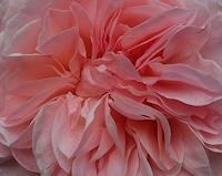 Renate-Horn-Pflanzen-Blumen-Poesie-Gegenwartskunst-Gegenwartskunst