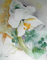 Helga-MATISOVITS-Pflanzen-Natur
