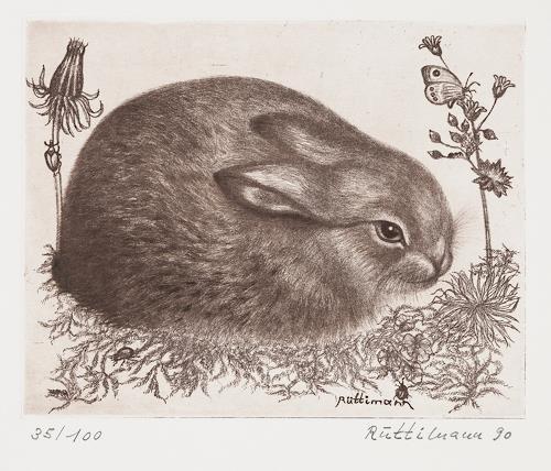Hans Rüttimann, Junges Wildkaninchen - Oryctolagus cuniculus (L.), Tiere: Land, Realismus
