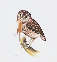 Hans-Ruettimann-Tiere-Luft-Neuzeit-Realismus
