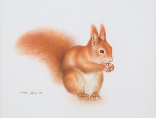 Hans Rüttimann, Eichhörnchen - Sciurus vulgaris (L.), Tiere: Land, Realismus