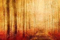 H. Hultsch, Der zauberhafte Elfenwald