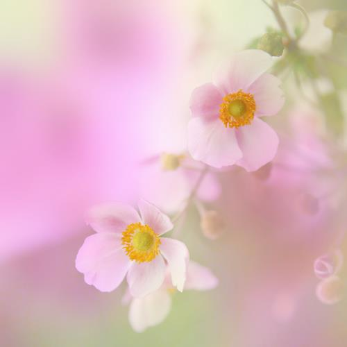 Heike Hultsch, Zarte Blümchen, Pflanzen: Blumen, Gefühle: Liebe, Hyperrealismus, Expressionismus