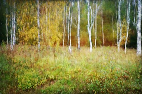 Heike Hultsch, Malerisches Birkenwäldchen, Pflanzen: Bäume, Landschaft: Herbst, Neo-Impressionismus