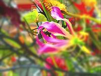 Catrin-Mueller-Pflanzen-Blumen-Moderne-Moderne
