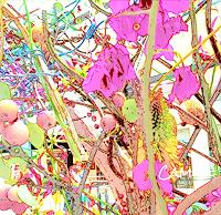 Catrin-Mueller-Pflanzen-Blumen-Diverses-Gegenwartskunst-Gegenwartskunst