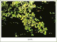 gerd-kemmerling-Natur-Wald-Gefuehle-Freude-Moderne-Pop-Art