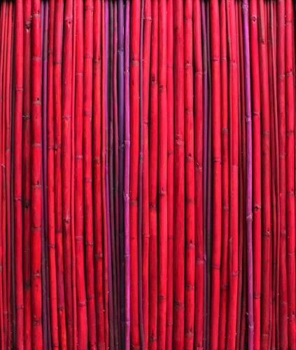 Friedhelm Raffel, Rotes Rohr, Diverse Pflanzen, Moderne, Abstrakter Expressionismus