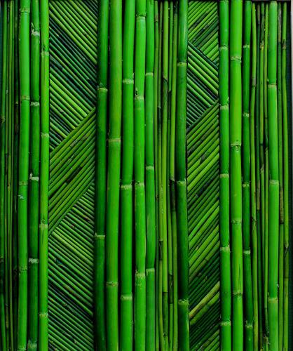 Friedhelm Raffel, Arundo herbeus- Maßwerk, Pflanzen, Impressionismus