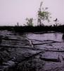 Wally Leiking, dark wet, Landschaft, Landschaft: Herbst, Abstrakte Kunst
