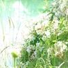 Wally Leiking, gentle mood, Pflanzen, Landschaft, Abstrakte Kunst