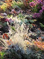 Beate-Ehmann-Abstraktes-Pflanzen-Moderne-Abstrakte-Kunst