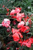 Beate-Ehmann-Natur-Pflanzen-Blumen-Moderne-Abstrakte-Kunst