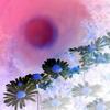 Beate Ehmann, Gänseblümchen, Pflanzen: Blumen, Abstraktes, Abstrakte Kunst, Expressionismus