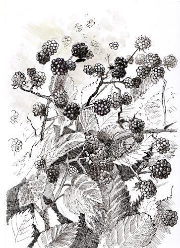 Susanne Thäsler-Wollenberg, Brombeer, Pflanzen: Früchte, expressiver Realismus