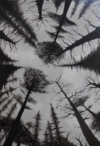 Sewo43, Perspektivwechsel, Pflanzen: Bäume, Landschaft: Winter, Abstrakte Kunst