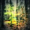 Uli Schweitzer, Buche, Landschaft: Frühling, Natur: Wald, Gegenwartskunst