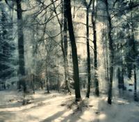 U. Schweitzer, Winter