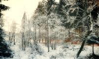 Uli-Schweitzer-Landschaft-Winter-Natur-Wald-Moderne-Fotorealismus