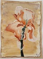 Marie-Ruda-Pflanzen-Blumen-Pflanzen-Blumen-Neuzeit-Realismus