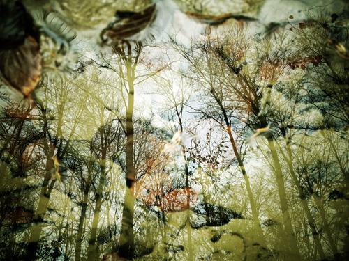 Andrea Kasper, Himmelsblick, Natur, Pflanzen, Minimal Art, Expressionismus
