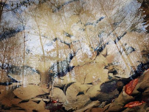 Andrea Kasper, Fantasie der Wirklichkeit, Natur, Pflanzen, Minimal Art, Expressionismus