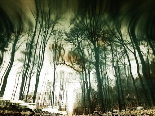 Andrea Kasper, Anziehungskraft, Natur: Wald, Abstraktes, Minimal Art