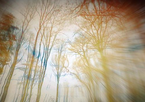 Andrea Kasper, Der kühle Wind neben dem Ufer, Pflanzen, Natur, Gegenwartskunst