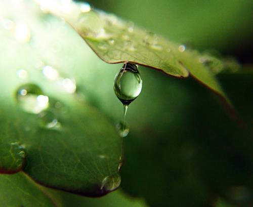 Andrea Kasper, Welttanztag: Solotanz des Regentropfens, Diverse Pflanzen, Natur: Wasser, Gegenwartskunst