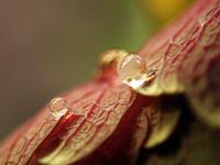 Andrea-Kasper-1-Pflanzen-Blumen-Natur-Wasser-Gegenwartskunst-Gegenwartskunst
