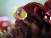 Andrea-Kasper-1-Diverse-Pflanzen-Natur-Wasser-Gegenwartskunst-Gegenwartskunst