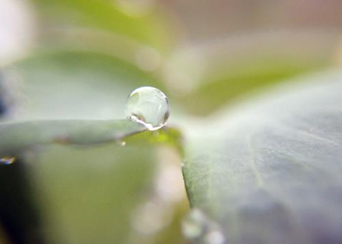 Andrea Kasper, Lautlos vergnügt, Pflanzen: Blumen, Natur: Wasser, Gegenwartskunst