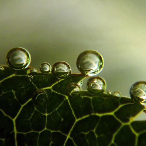 Andrea Kasper, Aus der Gießkanne, Diverse Pflanzen, Natur: Wasser, Gegenwartskunst, Expressionismus
