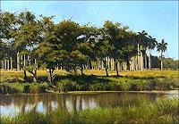 Lorenzo-Linares-Diverse-Landschaften-Landschaft-Tropisch