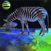 D. Bruhns, Zebra