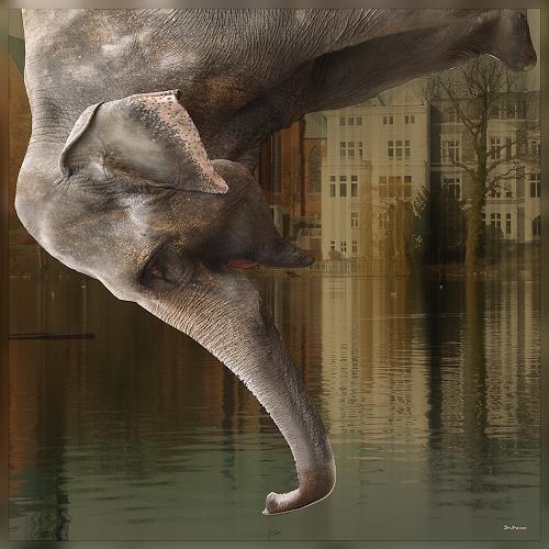 Dieter Bruhns, Point of View, Tiere: Luft, Tiere: Wasser, Gegenwartskunst, Abstrakter Expressionismus