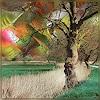 Dieter Bruhns, Dancing Trees