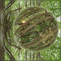 D. Bruhns, Rainforest