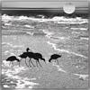 Dieter Bruhns, Black Seabirds