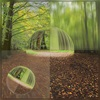 Dieter Bruhns, Forest, Dome and Sphere