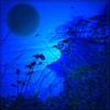 Dieter Bruhns, Blue Cliff