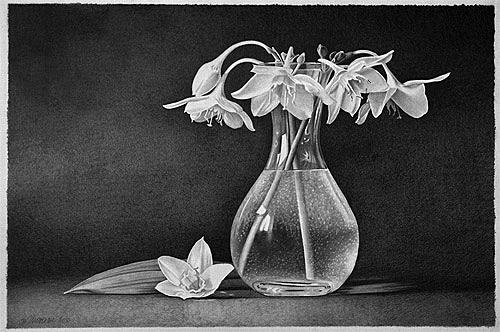 Dietrich Moravec, Weiße Blüten, Pflanzen: Blumen, Stilleben, Fotorealismus