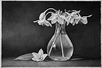 Dietrich-Moravec-Pflanzen-Blumen-Stilleben-Moderne-Fotorealismus