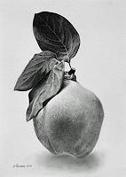 Dietrich-Moravec-Ernte-Pflanzen-Fruechte-Moderne-Fotorealismus