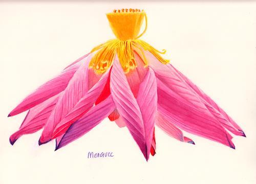 Dietrich Moravec, Lotus Ballerina, Dekoratives, Pflanzen: Blumen, Realismus